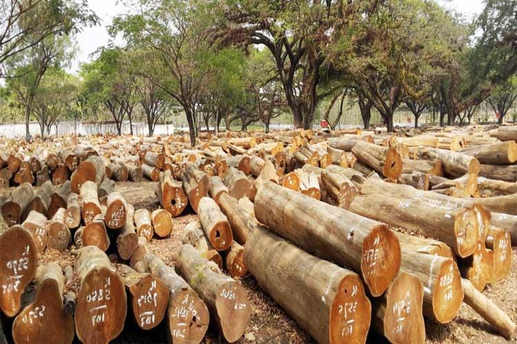 Log kayu jati