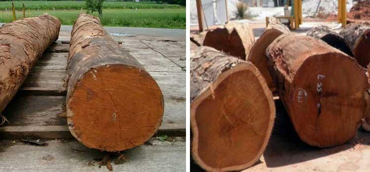Log kayu merbau
