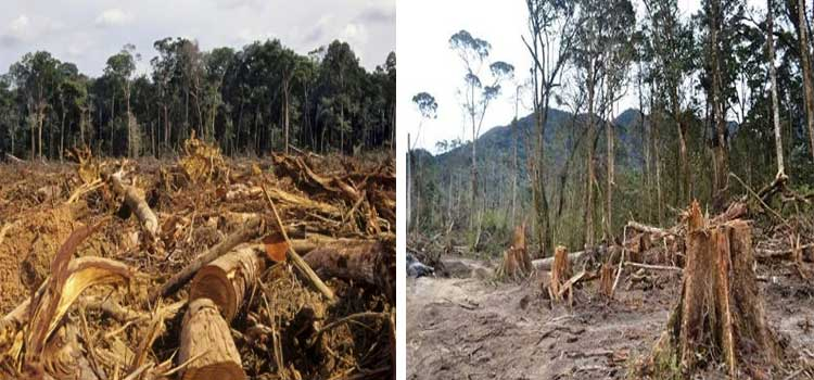 Pembalakan liar hutan